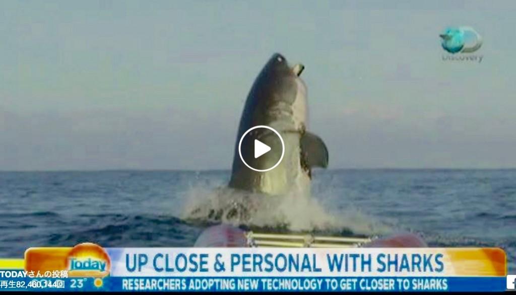 超巨大サメ