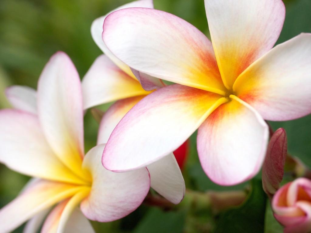 ハワイ語の名前が増えている?