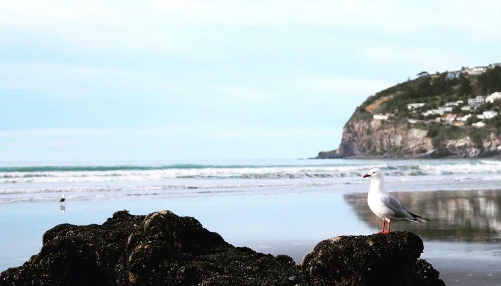 ニュージーランド サムナービーチ