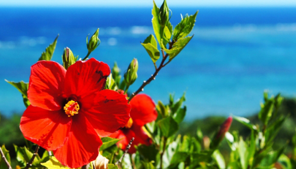 サーフィン・美しい海・ハイビスカス…けっこうある沖縄とハワイの共通点