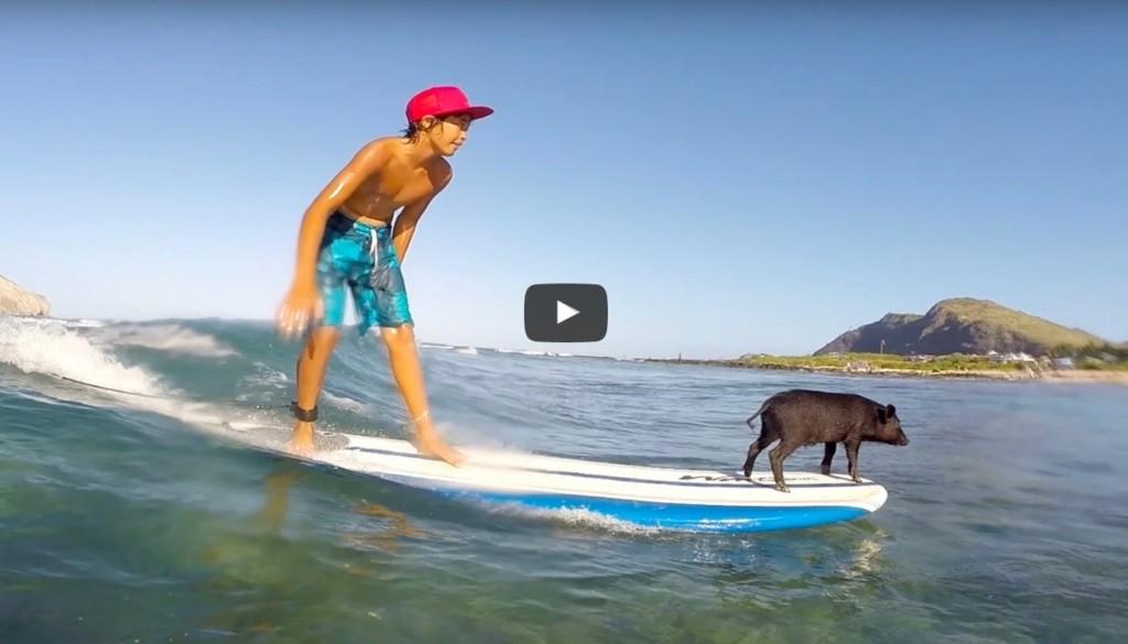 豚とサーフィン