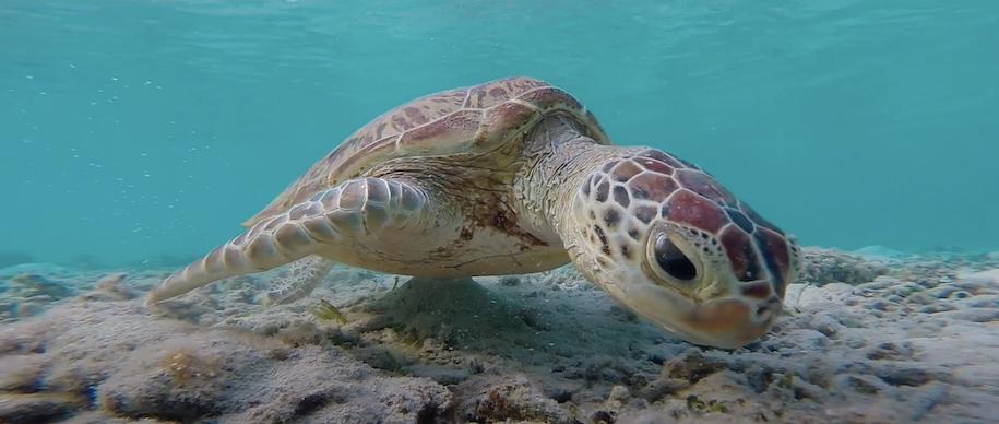 動画:A line in the sand - 奄美のジュラシックビーチ、嘉徳ビーチを守るために。