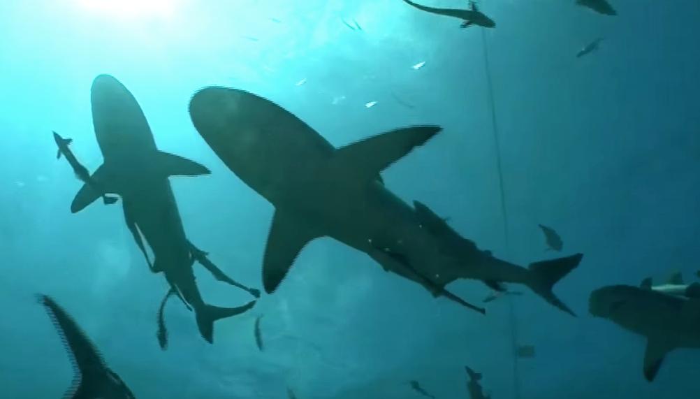 サーフィン サメ
