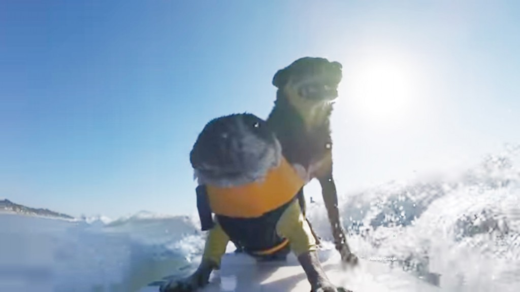 surfing_dog