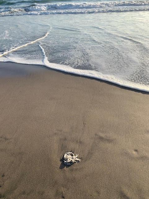 バリ島のゴミ事情